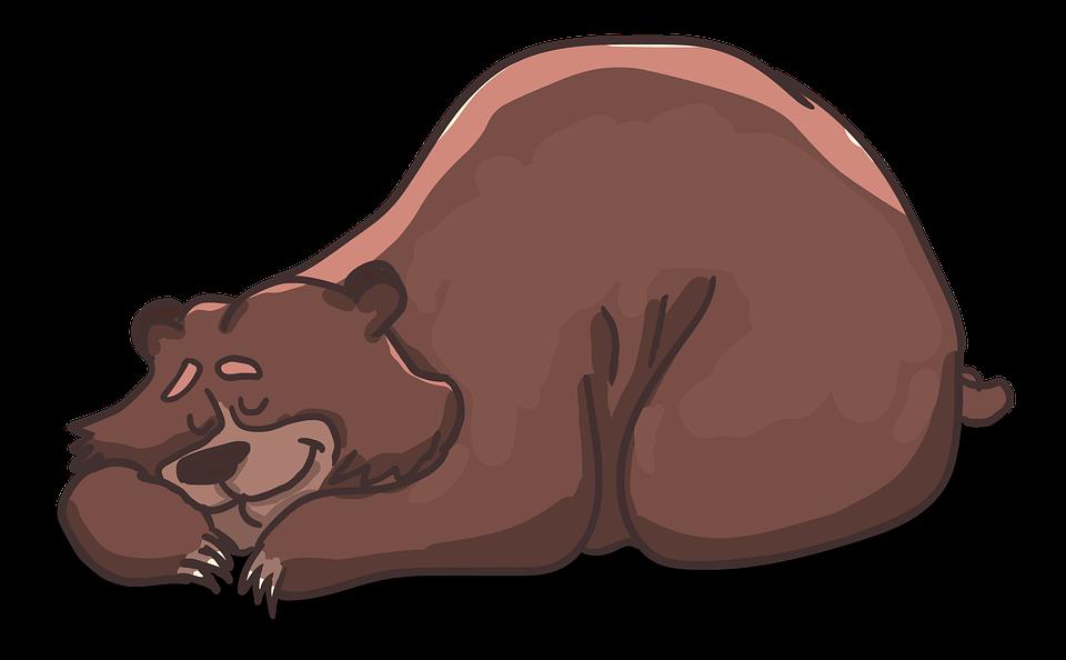 schlafender-bär